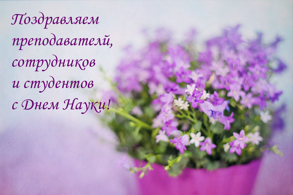 purple-flowers-2191623_960_720